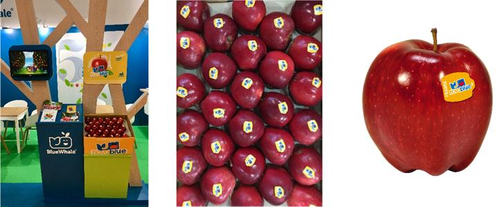 蓝鲸所展示的Novablue苹果